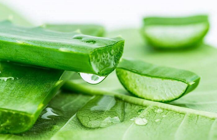 Nha đam không chỉ giúp làm mềm mịn làn da dưỡng ẩm cho da mà còn giúp kháng viêm, sạch mụn hiệu quả