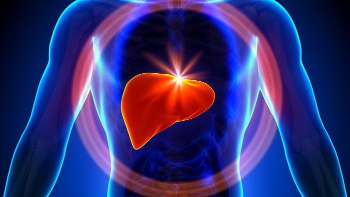 Gan là bộ phận quan trọng của cơ thể, tham gia vào nhiều hoạt động và thực hiện nhiều chức năng đối với cơ thể.