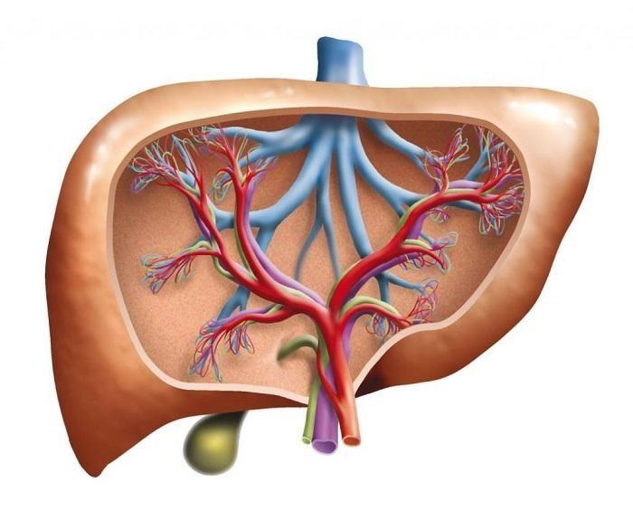 Men gan tăng cao là biểu hiện của việc gan đang bị hủy hoại bởi một nguyên nhân nào đó. Men gan càng tăng cao, gan càng bị tổn thương nặng nề.