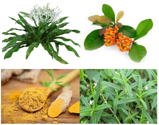 Một số thành phần thảo dược chính trong sản phẩm