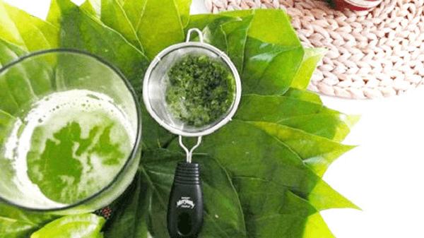 Nước sắc lá lốt giúp giảm triệu chứng của bệnh gout
