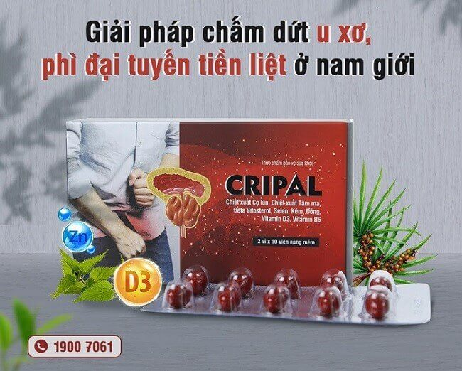 Viên uống Cripal giải pháp cho người bị u xơ tuyến tiền liệt hiệu quả